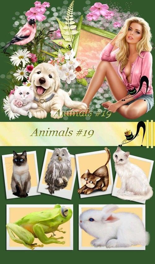 animals-19.jpg