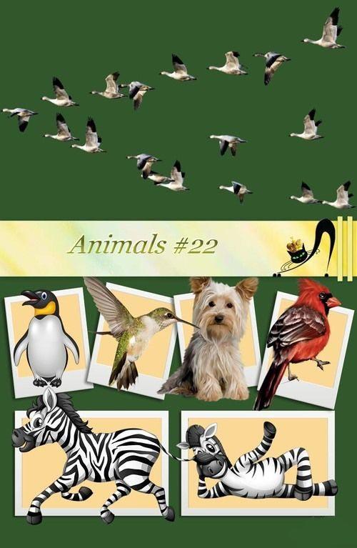 animals-22.jpg