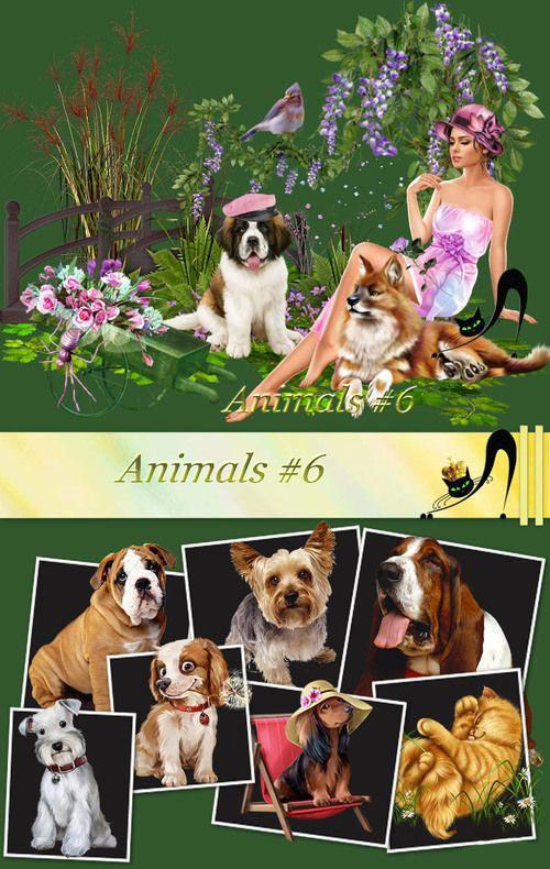 animals-6.jpg