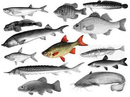 fish-jpg.986