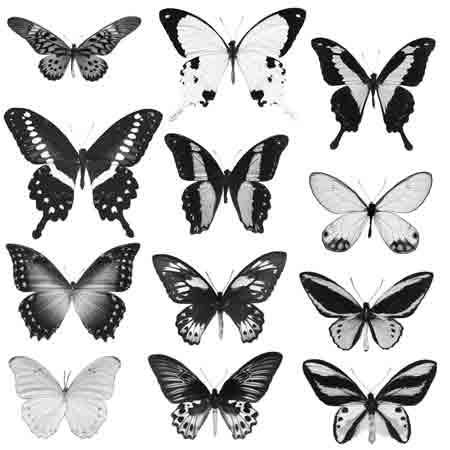 Tropical_Butterflies.jpg